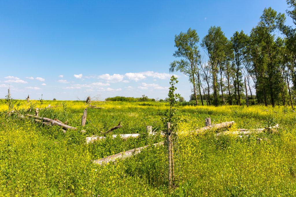 Natuurfoto van een veld met bloemen, bomen en een afscheiding van boomstammen